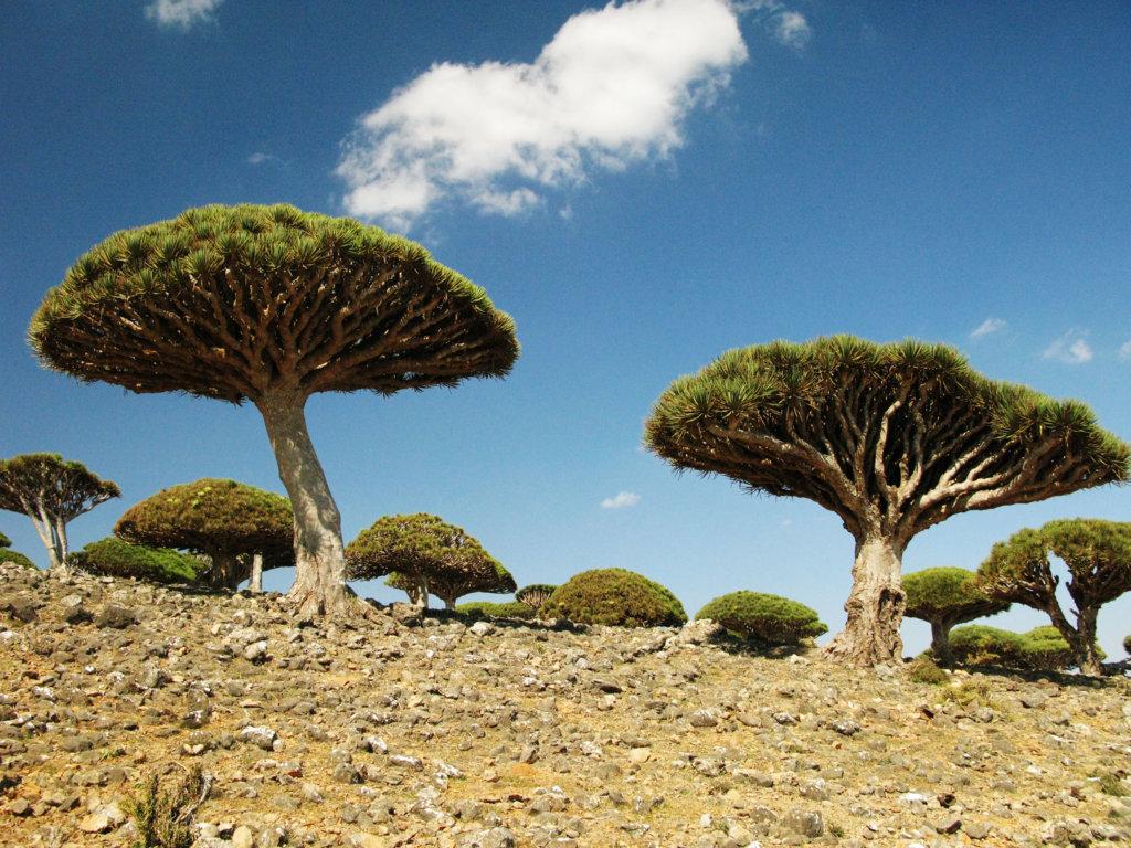 Ciekawostki geograficzne: Niezwykłe wyspy